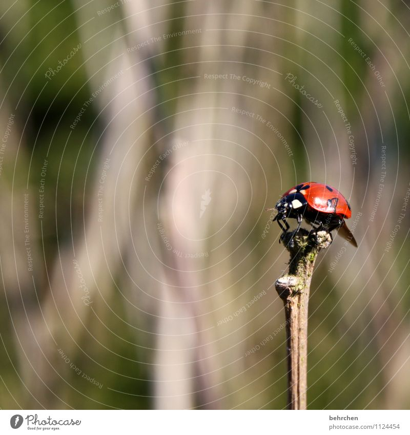 stick in the ass;) Nature Plant Animal Spring Summer Autumn Bushes Garden Park Meadow Forest Wild animal Beetle Wing Ladybird 1 Observe Relaxation Flying