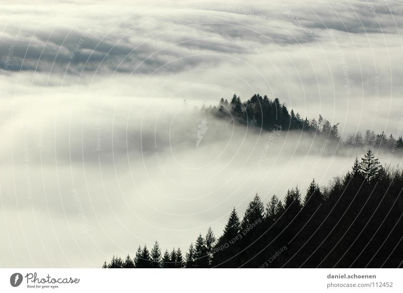 Invasion weather situation 2 Fog Clouds Black White Abstract Background picture Tree Autumn Black Forest Winter Fir tree Sky Mountain Contrast Shadow Weather