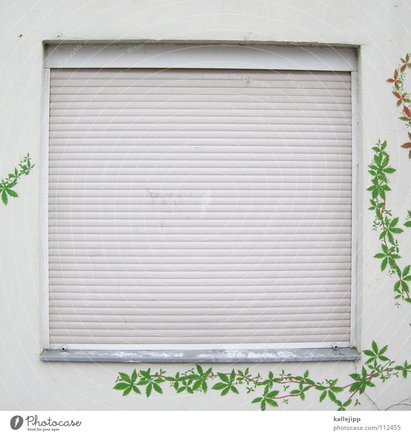 Sleeping Beauty Sleep Window Roller shutter Roller blind Venetian blinds House (Residential Structure) Wall (building) Private Bedroom Loud Calm Dark Darken