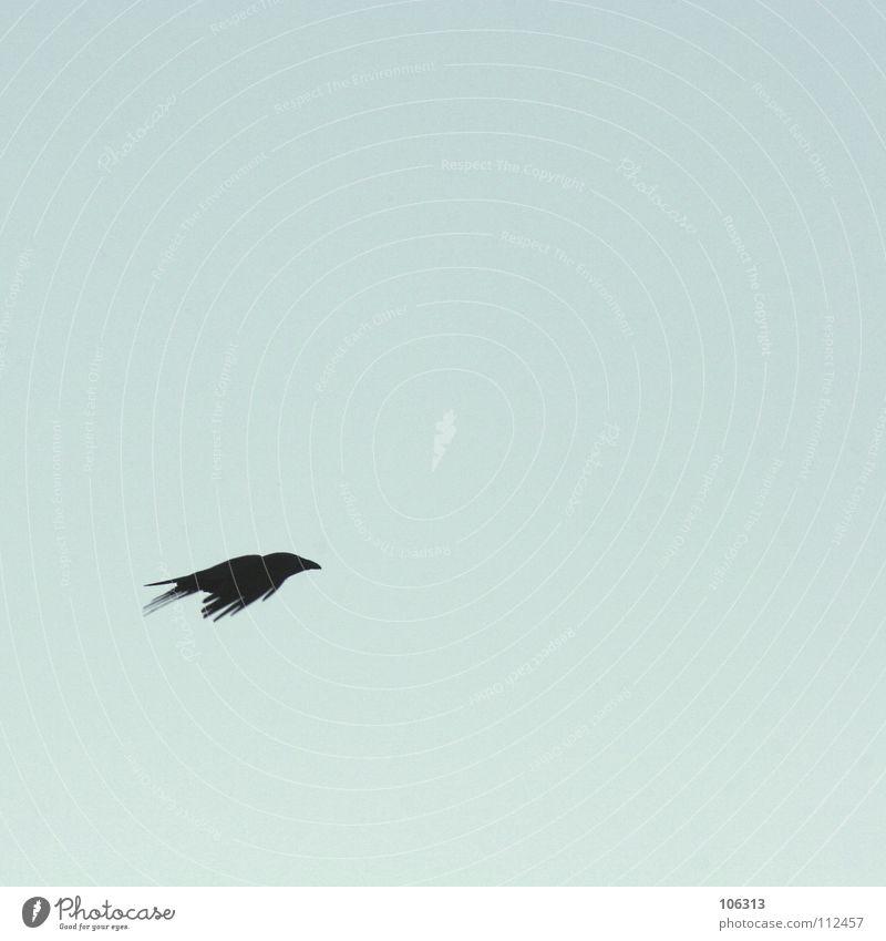 Sky Black Loneliness Freedom Bird Flying Free Empty Aviation Peace Minimal Raven birds Crow Animal Free space Aerodynamics