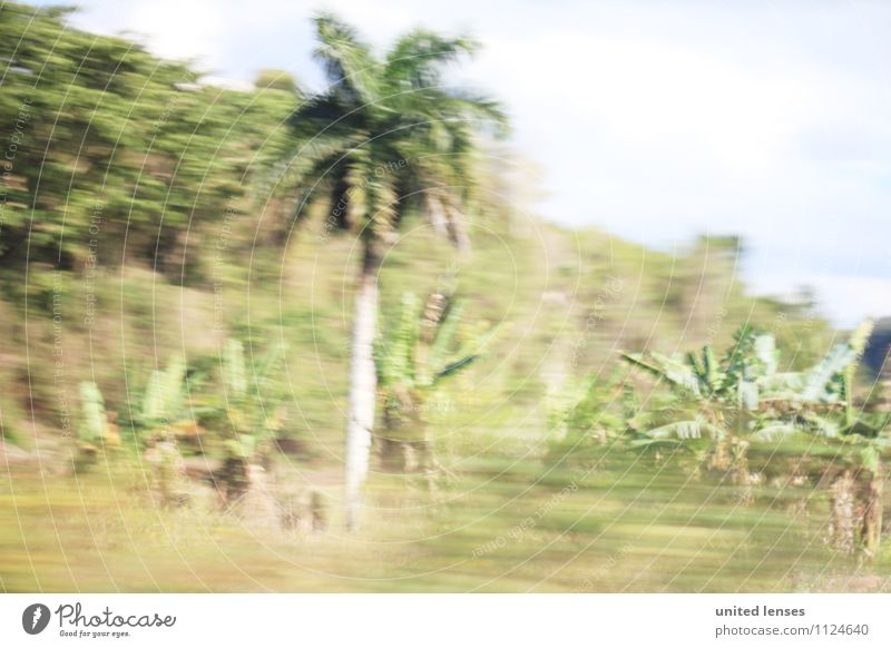 Vacation & Travel Summer Art Contentment Summer vacation Palm tree Cuba Vacation photo Palm frond Vacation mood Vacation destination Vacation traffic