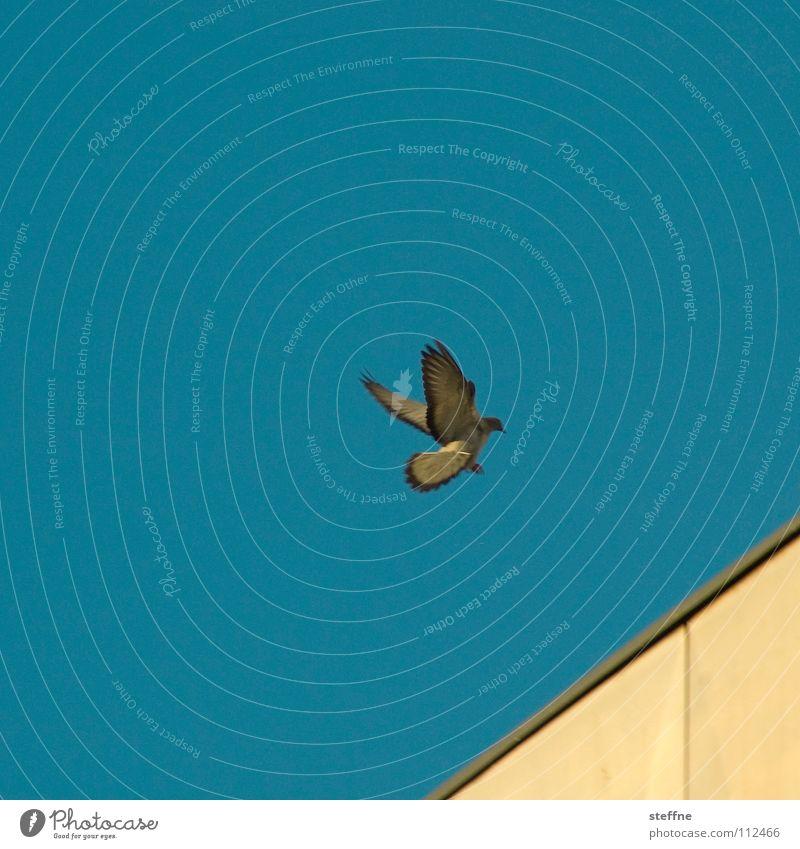 Sky White Blue Black Loneliness Yellow Autumn Bird Aviation Feather Wing Airplane landing Pigeon Aerodynamics