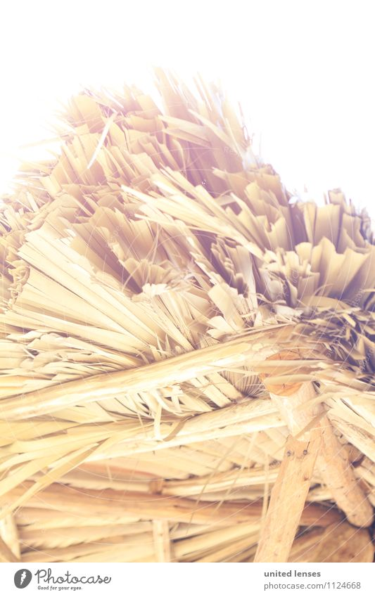 FF# Beach Roof I Art Esthetic Contentment Thatched roof Palm frond Straw Insubstantial Straw hut Colour photo Subdued colour Exterior shot Close-up