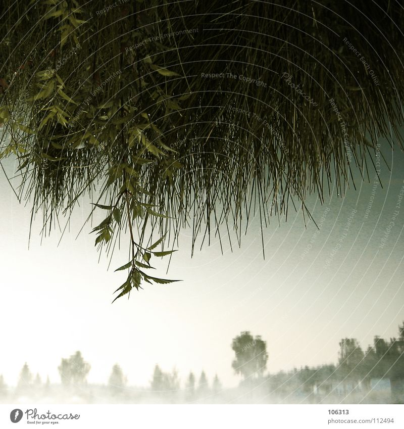 Sky Nature Water Green Tree House (Residential Structure) Far-off places Forest Relaxation Meadow Environment Emotions Grass Spring Dream Moody