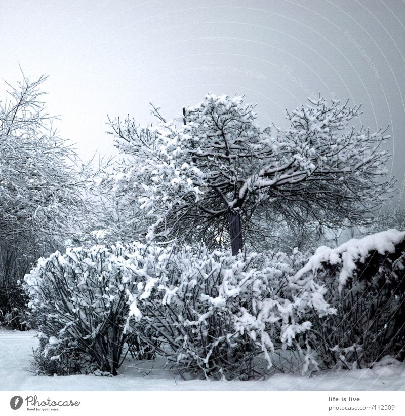 White Tree Winter Cold Snow Ice Frost Freeze Winter mood