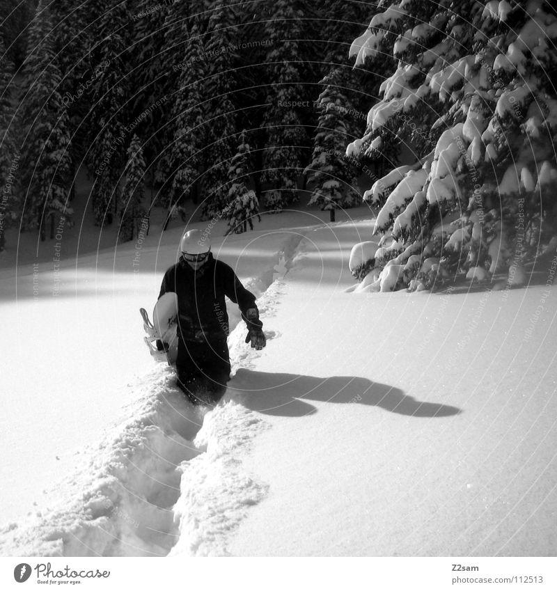 White Tree Loneliness Joy Winter Forest Black Lanes & trails Snow Sports Hiking Walking Romance Cool (slang) Deep Upward