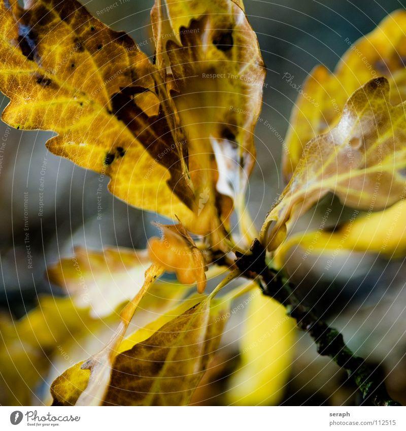 Autumnal Leaves Nature Plant Colour Tree Leaf Branch Seasons Twig Treetop Foliage plant Rachis Leaf green Colouring Oak tree