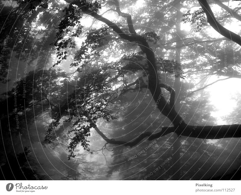 Fog_01 Forest Tree Damp Dreary Cold Autumn Loneliness Gray Black & white photo Autumnal