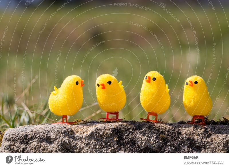 Environment Yellow Funny To talk Small Think Bird Together Friendship Fresh Sit Happiness Crazy Communicate Uniqueness Kitsch