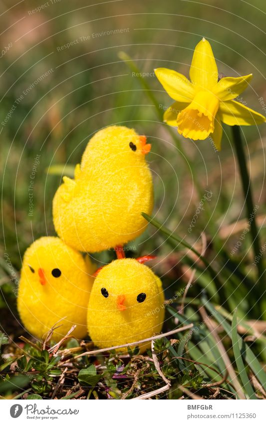 Beautiful Flower Joy Yellow Happy Above Fresh Happiness Crazy Cute Simple Touch Sign Curiosity Network Team