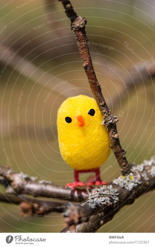 Learn to fly Joy Playing Adventure Freedom Expedition Easter Chick Toys Observe Flying Crouch Sit Wait Brash Happiness Fresh Cuddly Kitsch Small Funny Curiosity