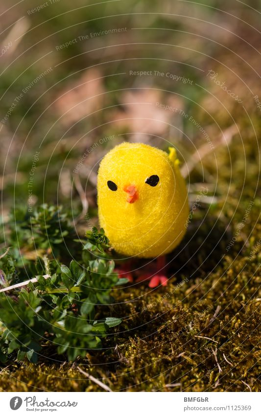 my yellow lucky bird Nature Earth Plant Grass Moss Fern Foliage plant Garden Park Meadow Bird Kitsch Odds and ends Toys Funster Relaxation Crouch Looking Sit
