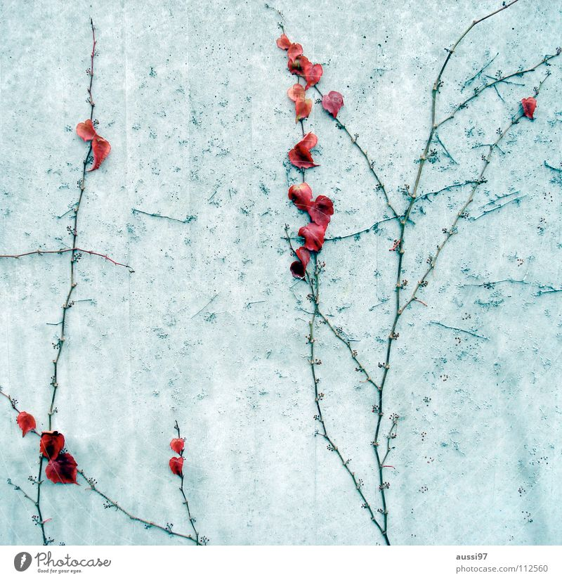 Plant Winter Autumn Wall (building) Transience Stick Root Ivy Creeper