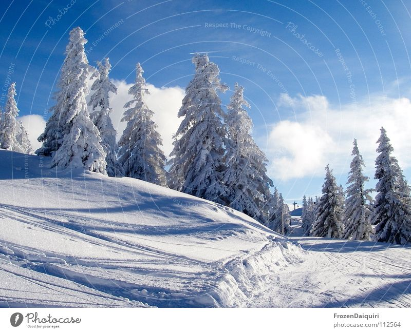 the first snow II Tree Emotions Spruce Happiness Slope Hill Light Coniferous trees Calm Snow layer Ski tracks Deep snow Federal State of Tyrol Environment White