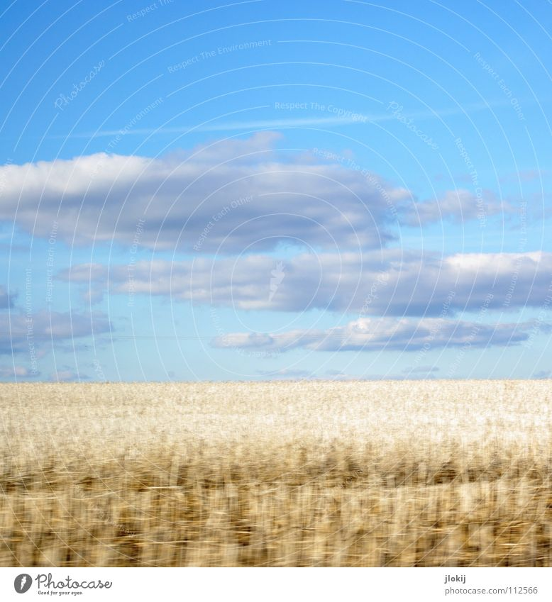 White field Field Wheat Stubble field Clouds Sky Driving Speed Snapshot Vapor trail Autumn Grain rogge Stopper Blue Distorted Harvest