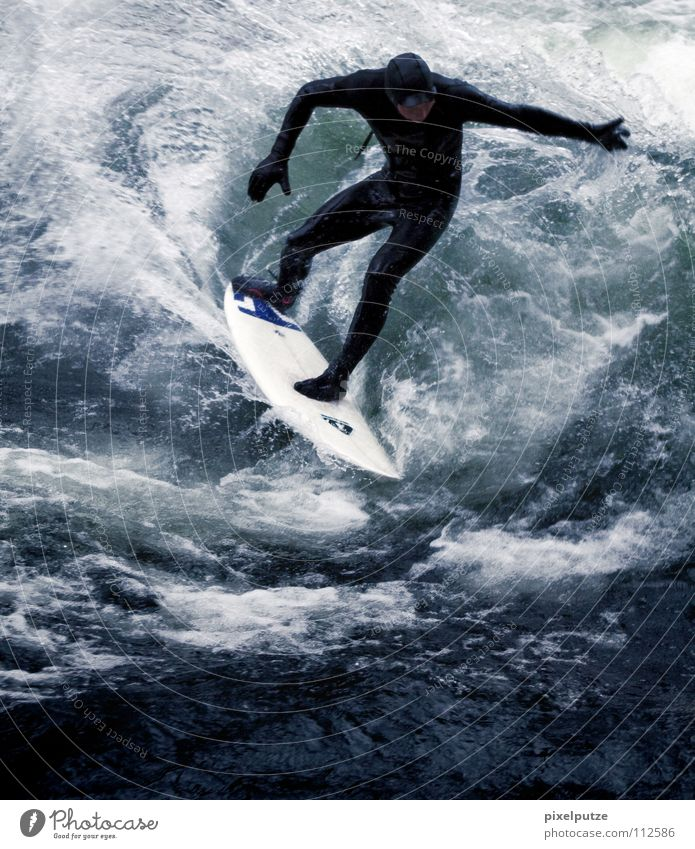 Water Sports Cold Playing Waves Wild animal Surfing Surfer Aquatics Surfboard Wetsuit Whitewater