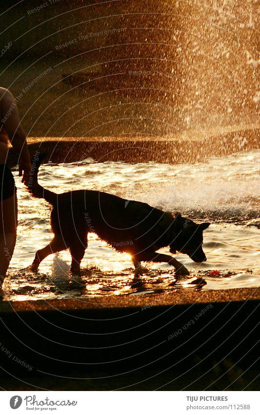 Water Sun Summer Joy Dog Warmth Wet Fresh Physics Swimming & Bathing Well Mammal Thirst Swimming trunks Refrigeration