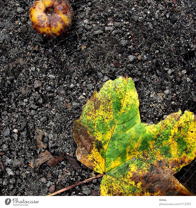 Green Leaf Black Yellow Street Autumn Death Lanes & trails Dirty Fruit Lie Putrefy Asphalt Transience Apple Traffic infrastructure