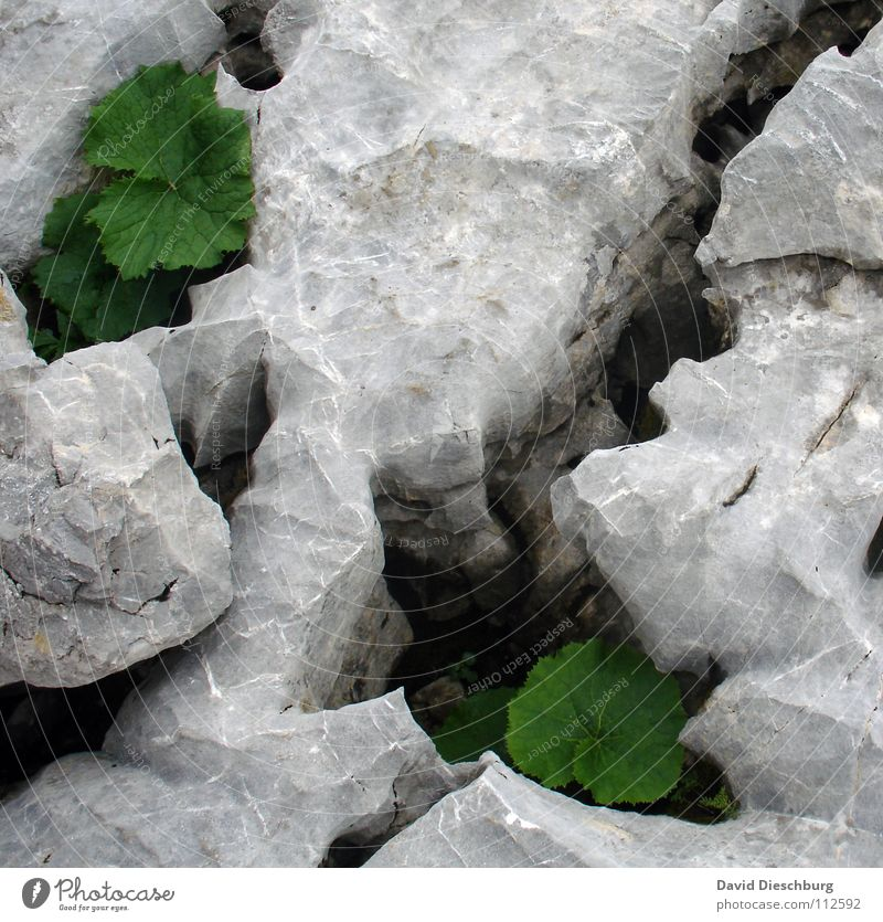 Nature White Green Plant Summer Leaf Black Yellow Colour Spring Gray Stone Feasts & Celebrations Large Rock Earth