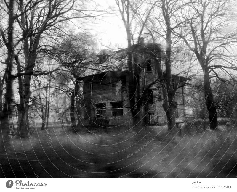 scrapped Winter House (Residential Structure) Fog Rain Tree Forest Building Architecture Dark Creepy Cold Loneliness Decline Shabby Leipzig Edge of the forest