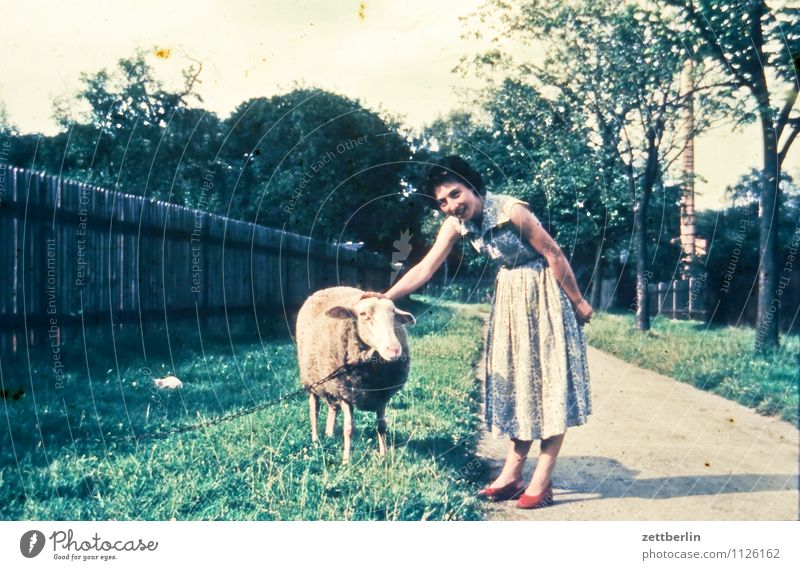 A sheep, a man, 1959 Woman Youth (Young adults) Young woman Vacation & Travel Travel photography Landscape Former Past Portrait photograph Animal portrait