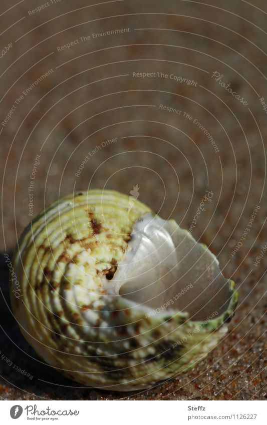 uninhabited shell Uninhabited Snail shell Empty snail shell Mother-of-pearl Open forsake sb./sth. Opening Vacancy Blank space void standing open Hollow Mussel