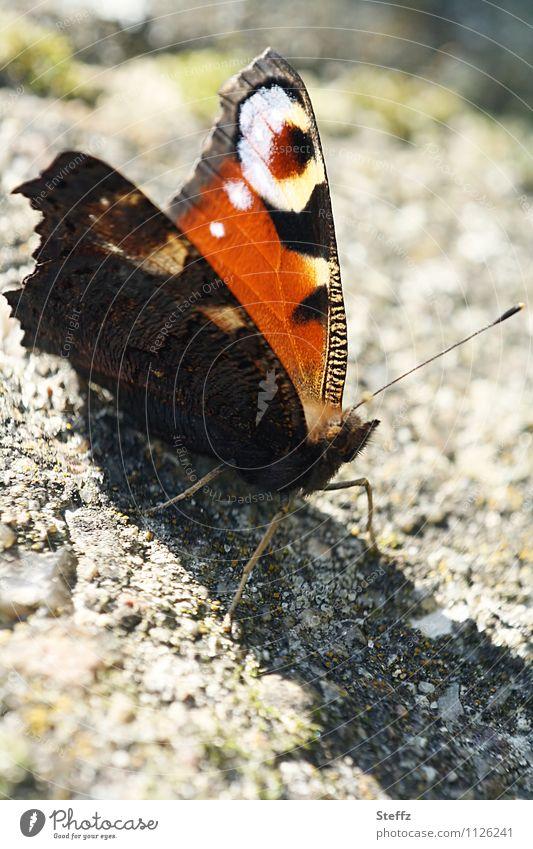 Sun welcome Butterfly Noble butterfly butterfly wings Well-being Snapshot take a break Break natural pattern Calm Sunbathing golden october mimicry
