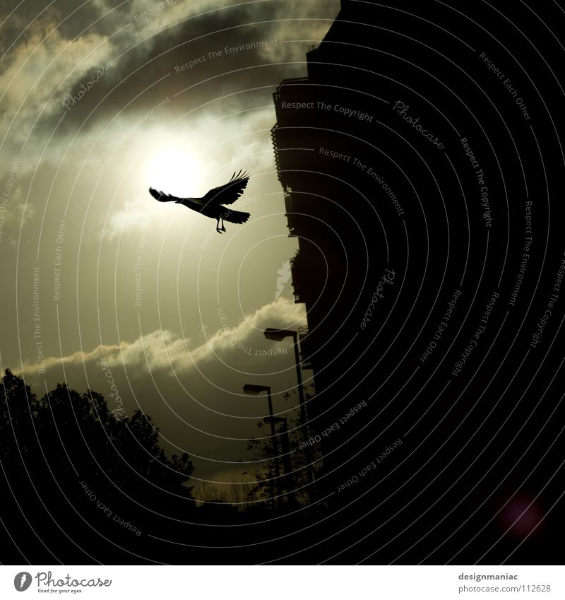 Sky City Sun Clouds Black Far-off places Dark Cold Death Gray Bird Fear Horizon Fog Flying Free