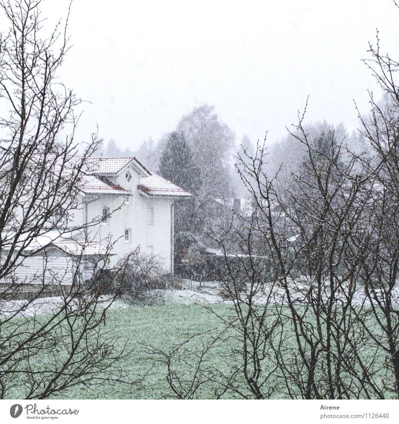 snow falling on meadows House (Residential Structure) Garden Clouds Winter Bad weather Snow Snowfall Grass Bushes Village Outskirts Detached house Settlement