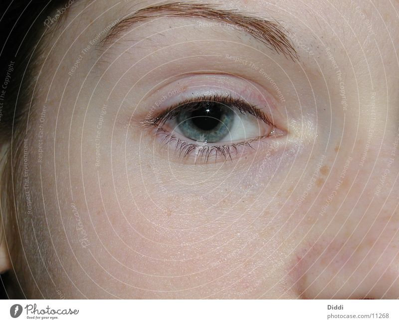 KL Inside Contact lense Human being Eyes Looking
