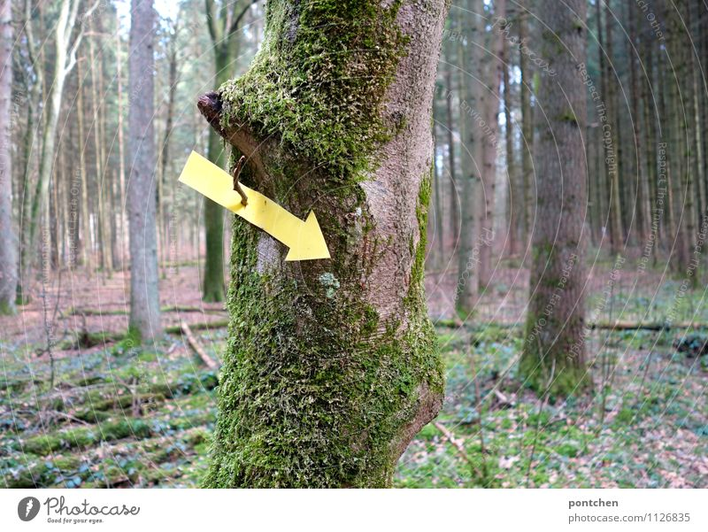Forest. Yellow arrow pointing down hangs from a tree with moss. Signpost Nature Sunlight spring Arrow Wegekreuz Direction Trend-setting Logging