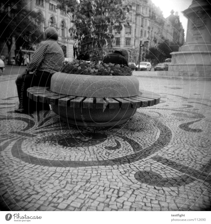 Old City Plant Vacation & Travel Calm Relaxation Free Sit Circle Round Bench Observe Longing Traffic infrastructure Seating