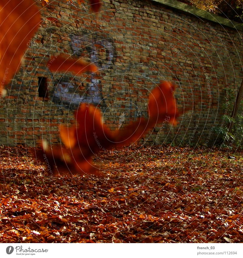end of autumn Leaf Wall (barrier) Red Yellow Autumn Characters Wall (building) Brick Floating Think Cold Orientation Hover Wind Autumnal colours Germany leaves
