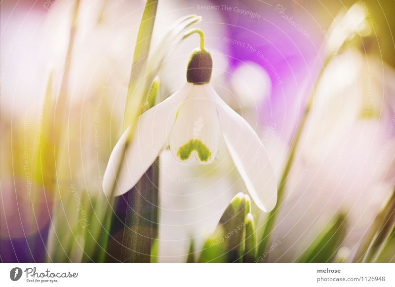 centred Style Design Nature Plant Spring Flower Grass Leaf Blossom Wild plant Snowdrop Spring flowering plant Flower stem Garden Patch of colour Blur Blossoming