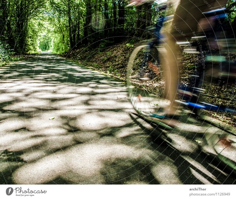 Human being Nature Blue Green Summer Tree Forest Movement Natural Sports Gray Legs Brown Feet Bicycle Speed