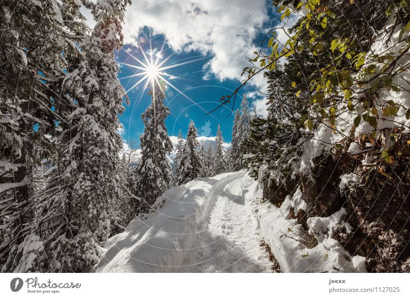 Let's go Trip Winter Snow Mountain Hiking Landscape Sky Clouds Sun Sunlight Weather Beautiful weather Forest Lanes & trails Bright Idyll Cold Vacation & Travel