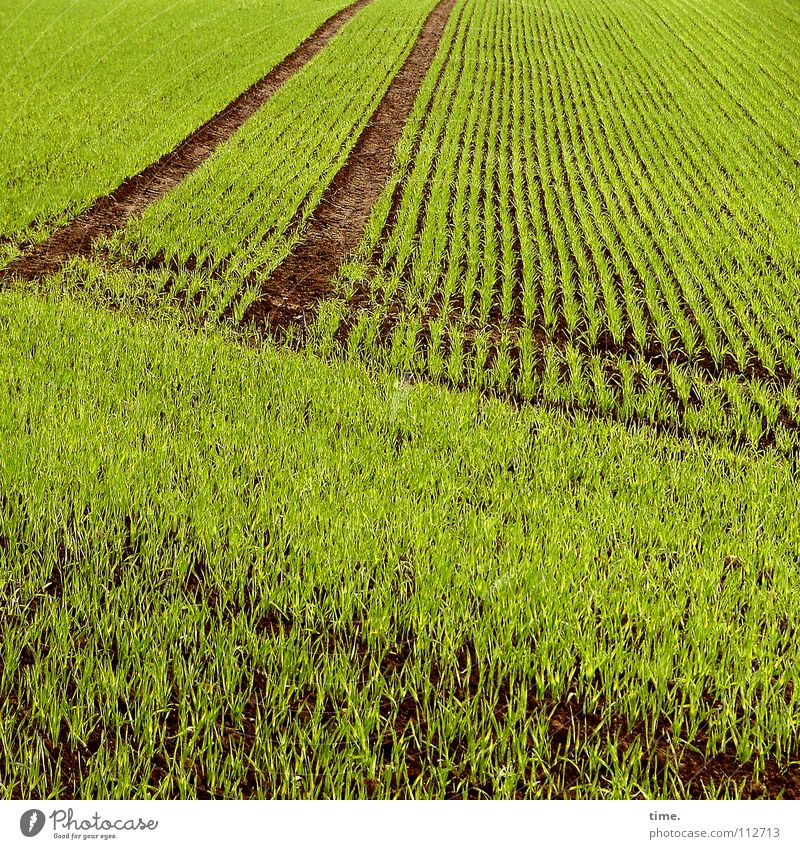 Green Plant Far-off places Sand Line Horizon Earth Field Arrangement Corner Near Row Classification Across Racing sports Tractor track