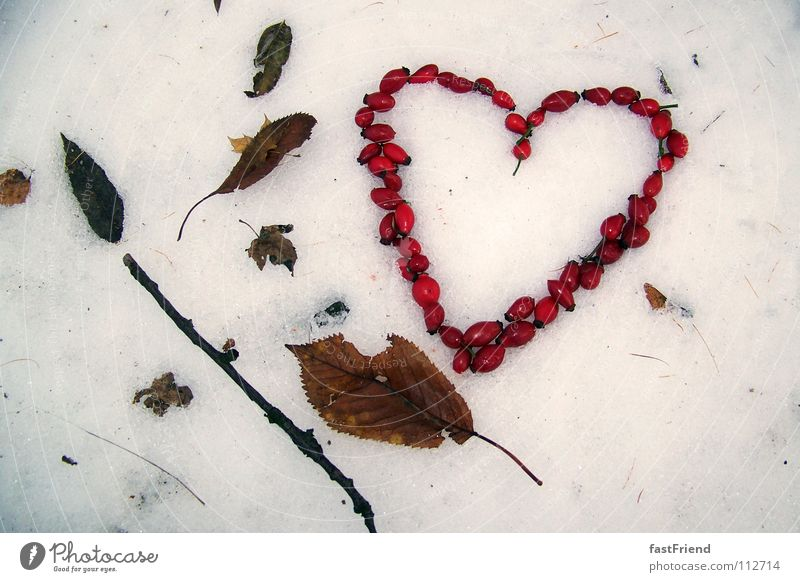Love has 4 seasons Stick Winter Leaf Autumn Cold Red Muddled Frozen Longing Seasons Heart Snow Structures and shapes Branch Wild animal haw dogrose rose hip