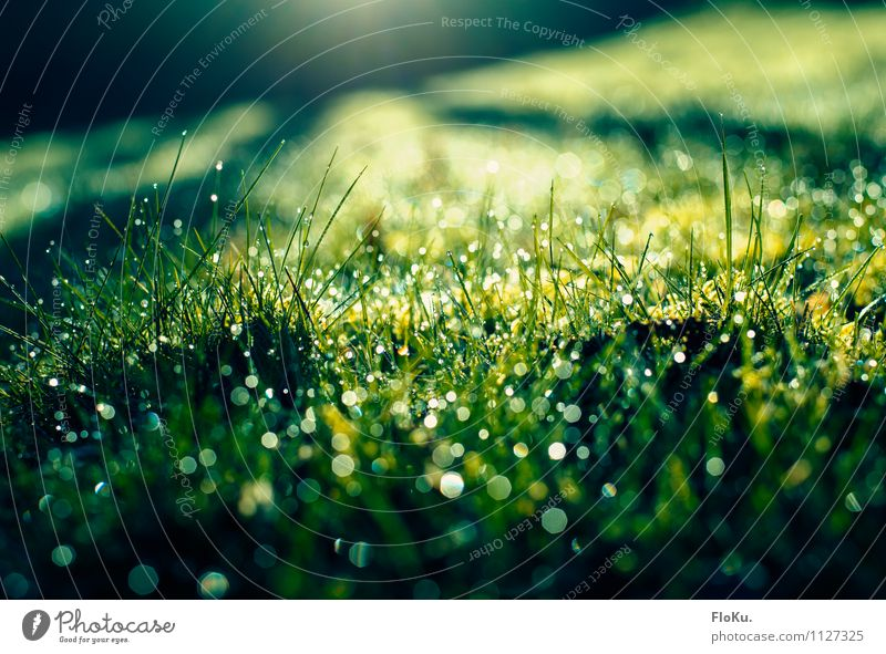 morning dew Environment Nature Plant Earth Water Drops of water Sunrise Sunset Sunlight Spring Rain Grass Moss Leaf Foliage plant Garden Meadow Glittering Wet