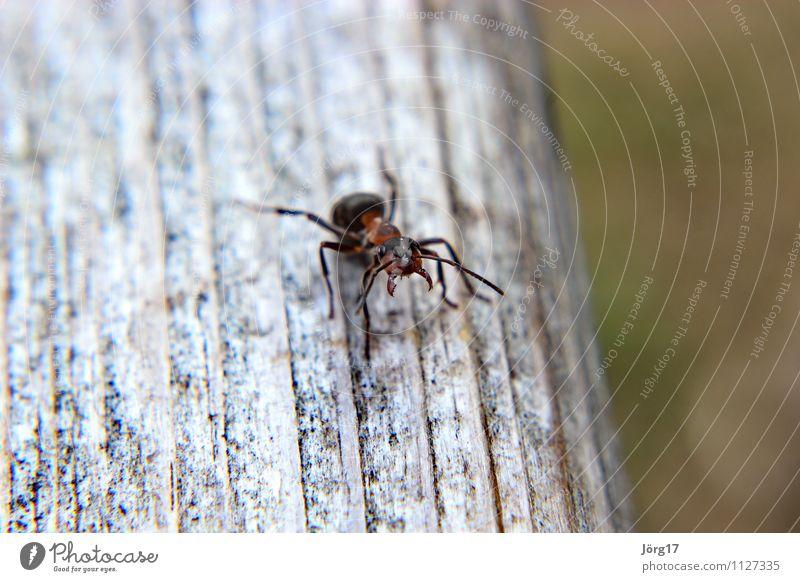 Nature Animal Wild animal Threat Aggression Ant