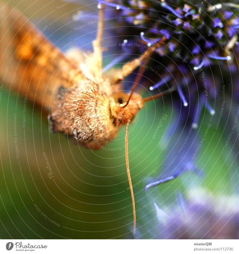 the beginning of life Moth Butterfly Animal Break Nutrition Nutrients Honey Blossom Plant Brown Feeler Vanilla sex Dark Pattern Flower Green White Easy Insect