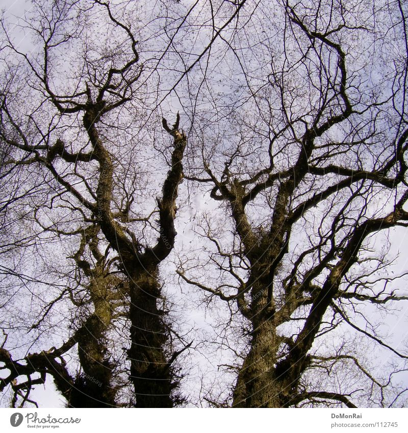 Tree (sometimes pragmatic) Colour photo Exterior shot Deserted Day Silhouette Worm's-eye view Air Sky Forest Virgin forest Güttingen Europe Wood Network Old