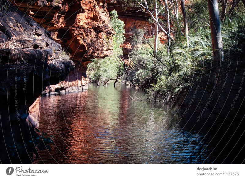 All year round water bearing billabongs overhanging several red rocks. Framed by bushes. The tourist destination in the Red Centre- Garden of Eden.Kings Canyon. Outback Northern Territory. Australia.