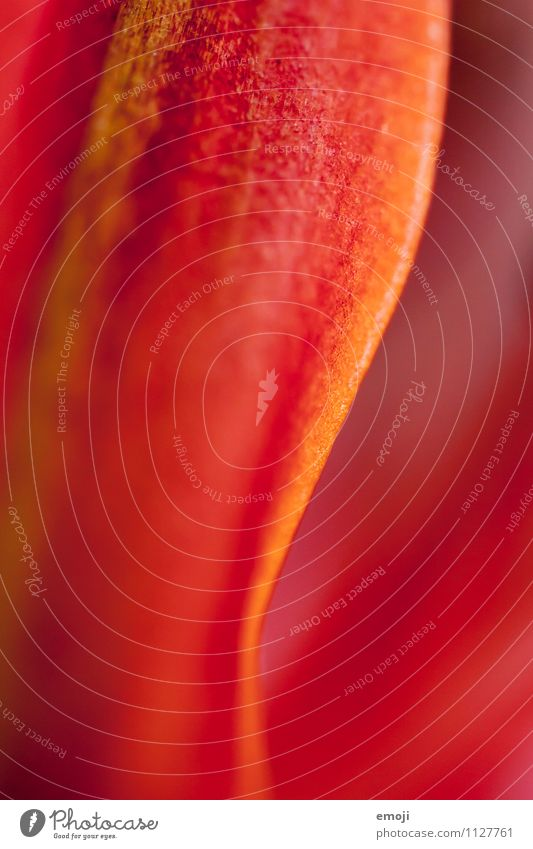 detail Environment Nature Plant Summer Flower Leaf Natural Red Curve Colour photo Multicoloured Detail Macro (Extreme close-up) Abstract Deserted Day