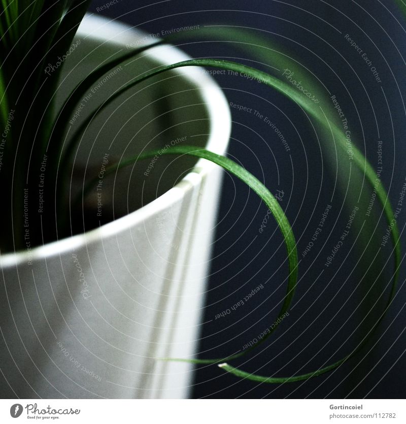 Nature White Green Plant Calm Black Life Grass Line Circle Round Decoration Stripe Living thing Curve Blade of grass