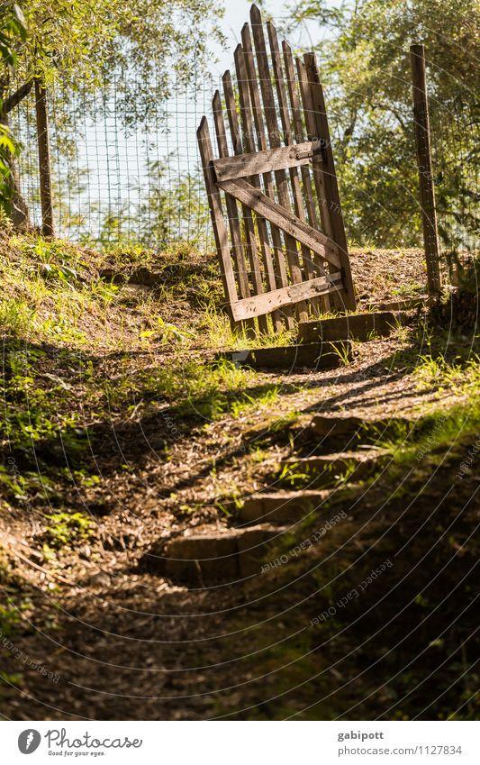 Door and gate open Fragrance Summer Garden Landscape Beautiful weather Forest Gate Lanes & trails Friendliness Happiness Garden door Mediterranean Appealing