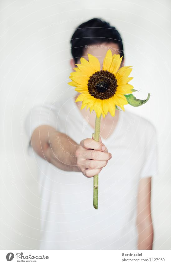 sorry Human being Masculine Young man Youth (Young adults) Hand 1 18 - 30 years Adults Beautiful Yellow White Sunflower Apology Gift Donate Give Flower