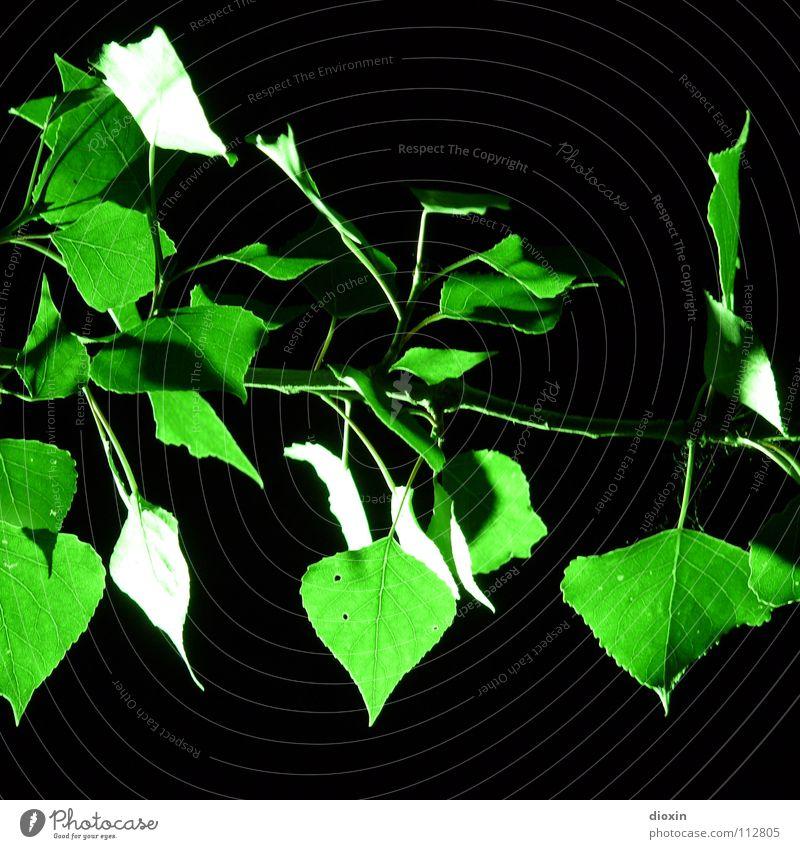 Nature Green Tree Plant Leaf Black Environment Garden Lighting Park Natural Growth Bushes Illuminate Twig Exotic