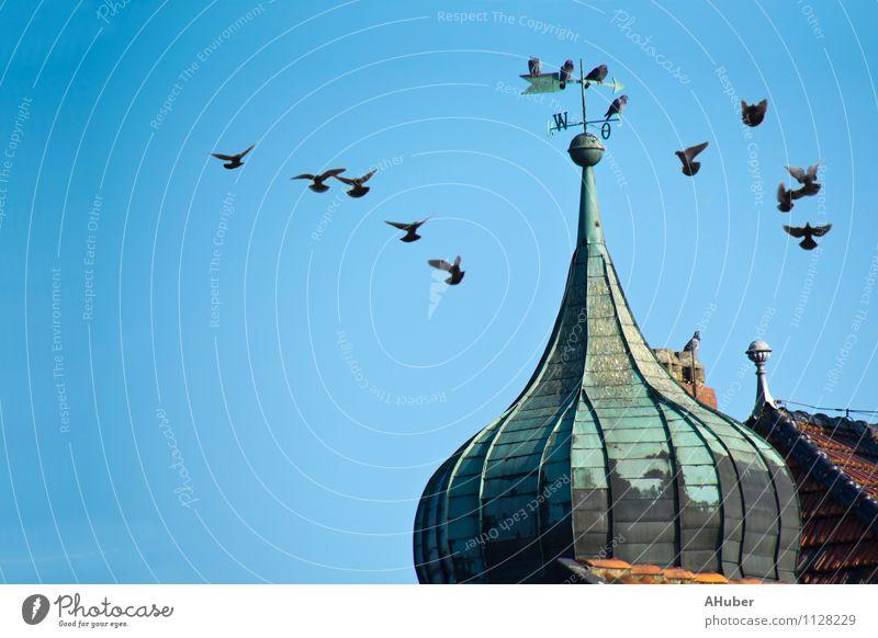 dove tower Village Deserted Tower Building Roof Landmark Animal Bird Pigeon Wing Flock Flying Esthetic Friendliness Historic Blue Green Happiness Loyalty