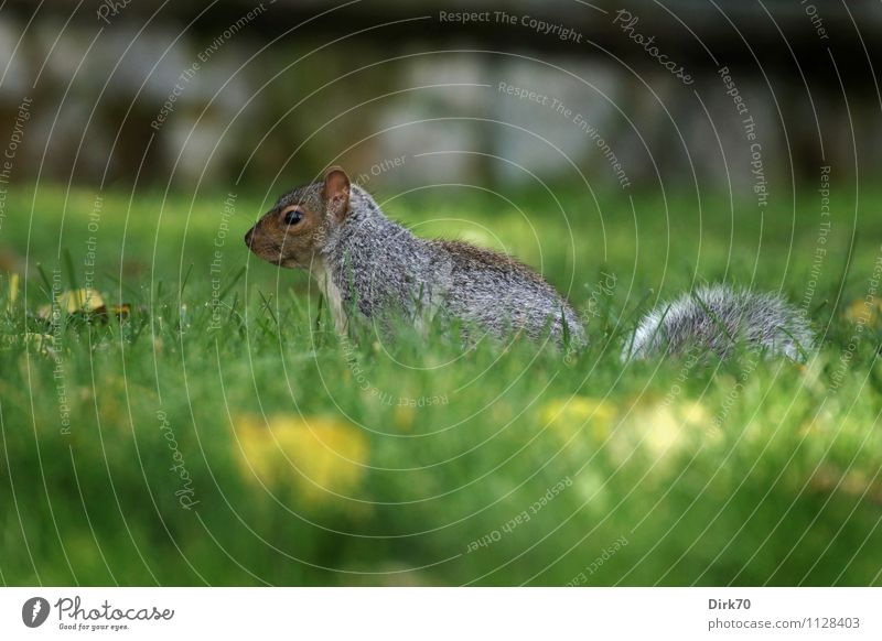 Nature City Plant Green Animal Black Environment Yellow Wall (building) Autumn Meadow Blossom Grass Wall (barrier) Gray Small